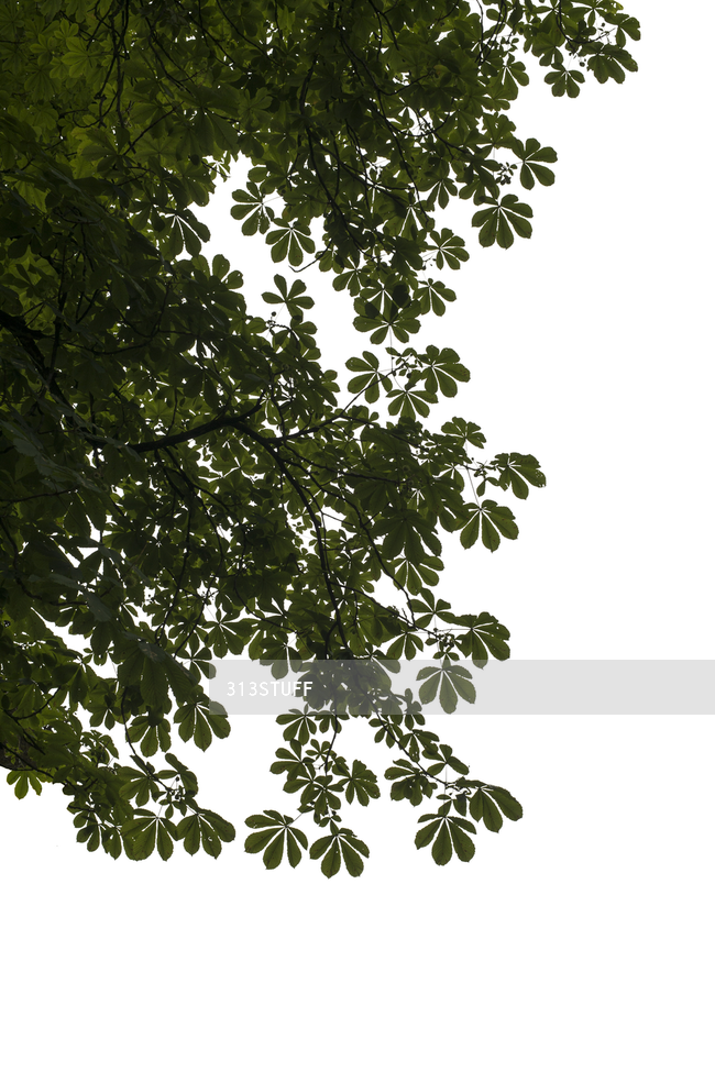 tree branches cutout